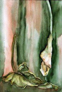 204-Calas IV  aquarelle 36x25