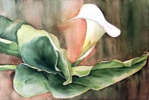 216-Calas XVI  aquarelle 35x50